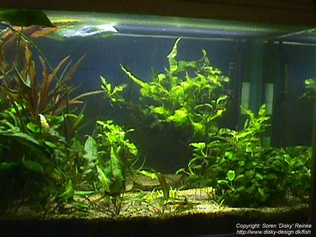 freshwater fish tank design the image kid has it